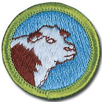 BSA Badge - Merit Badge Counselo